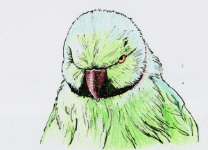 Zeichnung Corinna Assmann